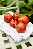 Fresh tomatoes on garden chair in the open air