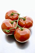 Four tomatoes on the vine