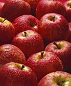 Mnay Freshly Washed Braeburn Apples