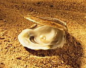 Opened Oyster Shell with Pearl on Sand