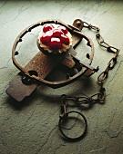 Mini Cherry Tart on Metal Animal Trap