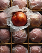 Many Apples Wrapped in Paper in a Crate with One Cameo Apple Unwrapped