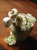 Fresh Garlic Bulbs in a Pestle with Flowers