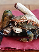 Shellfish Still Life; Close Up
