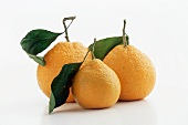 Three Satsuma Tangerines with Leaves on a White Background