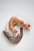 Two Whole Shrimp, One Raw, One Cooked, White Background