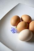 Fresh Organic Eggs with Blossom