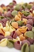 Organic Multi-Colored Shell Pasta