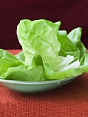 Fresh Bib Lettuce on a Plate