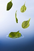 Basil leaves falling into water