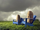 Potatoes on Wooden Chairs