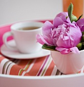 Pink Flower Blossom in a Tea Cup, Cup of Tea