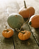Assorted Mini Pumpkins and Gourds