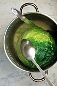 A Head of Cabbage in a Pot of Water