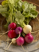 Bunch of Fresh Multi-Colored Radishes