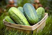 Basket of Pickling Cucumbers in the Grass