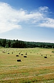 Hay Bails in a Large Field on a Sunny Day