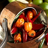 Scotch Bonnet and Chili Peppers in Copper Pots