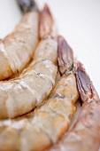 Raw Shrimp Tails; Close Up