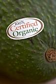 Avocado aus biologischem Anbau mit Etikett