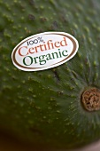 !00% Certified Organic Sticker on an Avocado