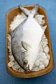 Whole Pompano Fish on Ice