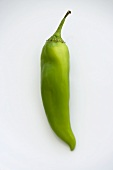 Single Anaheim Chili Pepper on a White Background