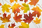 Bunte Herbstblätter vor weißem Hintergrund