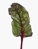 A Red Chard Leaf
