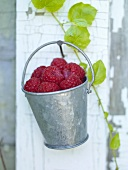 A Pail of Raspberries Hanging on a Nail