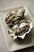 Geöffnete rohe Auster
