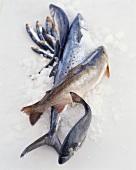 Various Whole Fresh Fish on Ice
