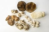 Mushroom Still Life