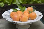 Fresh Apricots on a Pedestal Dish