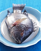 Whole Raw Snapper on a Dish