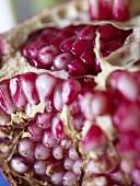 Close Up of Pomegranate Seeds