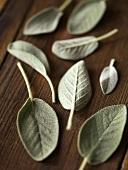 Sage Leaves on Wood