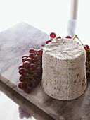 Weichkäse mit roten Weintrauben auf einer Marmorplatte