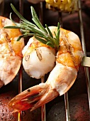 Grilled Shrimp Kabob with Rosemary