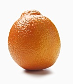 A Single Orange on White Background