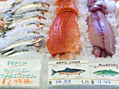 Sardines, Artic Char and Bluefish on Ice at a Seafood Market