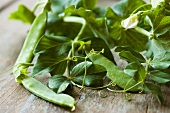 Pea Pods and Vines on Wood