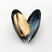Opened Mussel on White