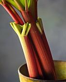 Rhubarb Stalks in Antique Container