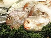 Fresh Whole Fish at Market