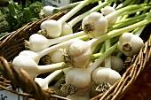 Basket of Garlic at Burlington Vermont Farmers Market