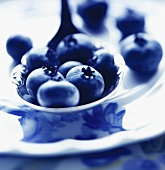 Fresh Blueberries on Spoon Close Up