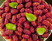 Bowlful of Whole Mulberries