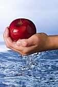 Child's Hand Scooping an Apple From Water