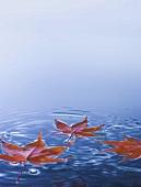 Ahornblätter schwimmen im Wasser